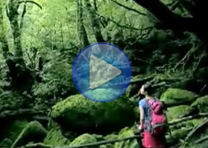 创艺享案例:绿森林集团企业宣传片