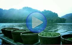 创艺享案例:茶叶宣传片